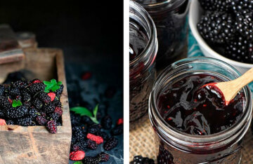 Mulberry: the benefits of berries and 3 recipes