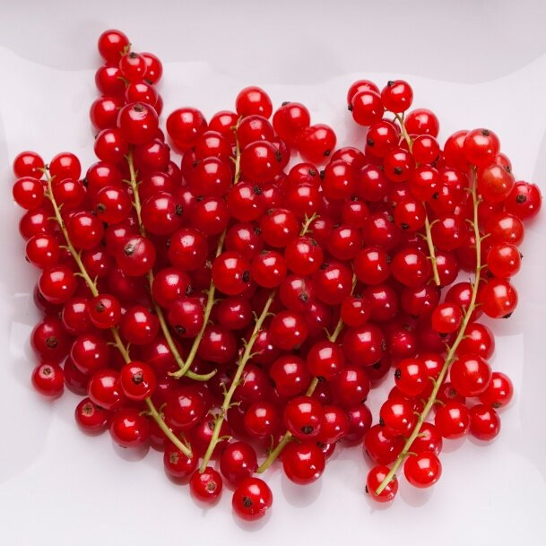 Recipes from red currant