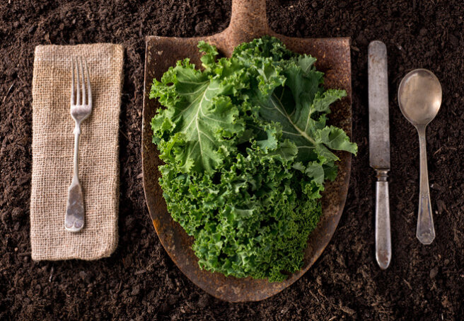 Kale cabbage leaves