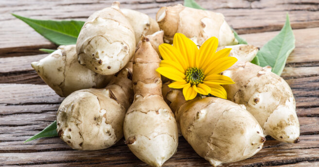 Jerusalem artichoke: the benefits and harms of ground pears