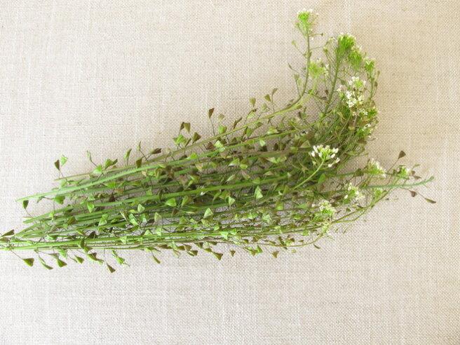 Shepherd's Bag Salad